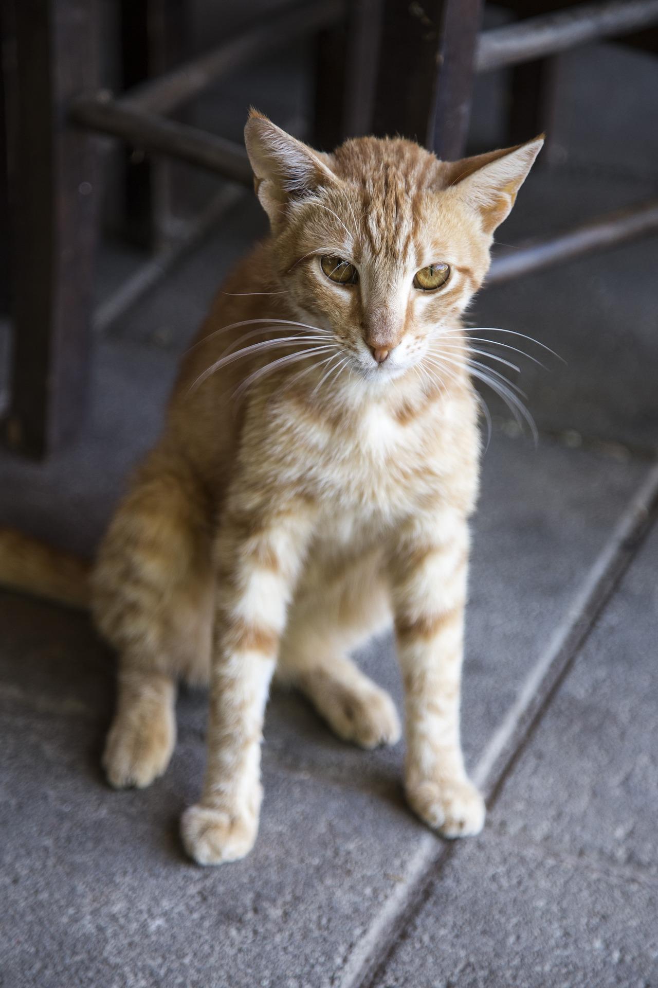 cat-1542855_1920